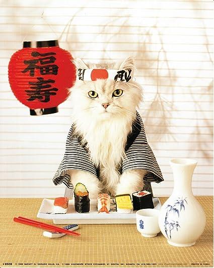 Amazon.com: Sushi Cat Wall Decor Japanese Cute Funny Kitten Art ...
