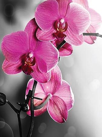 Fototapete Tapete Wandbild Welt Der Traume Rosa Orchidee