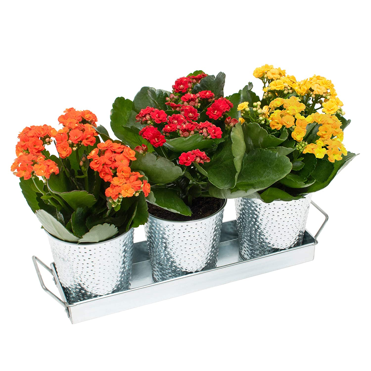 Saratoga Home Galvanized Planter Pots – Set of 3 Indoor Planters with Drainage and Tray – Perfect for All Small House Plants, Herbs, African Violets and Succulents