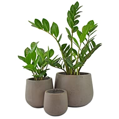 Cement Samai Planter Pot Set of 3 Garden Patio Decor