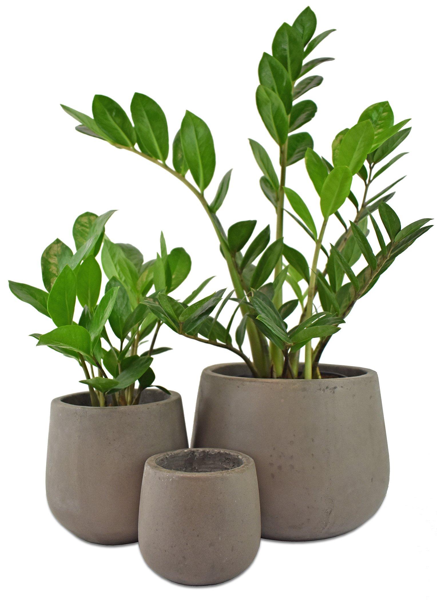 Cement Samai Planter Pot Set of 3 Garden Patio Decor