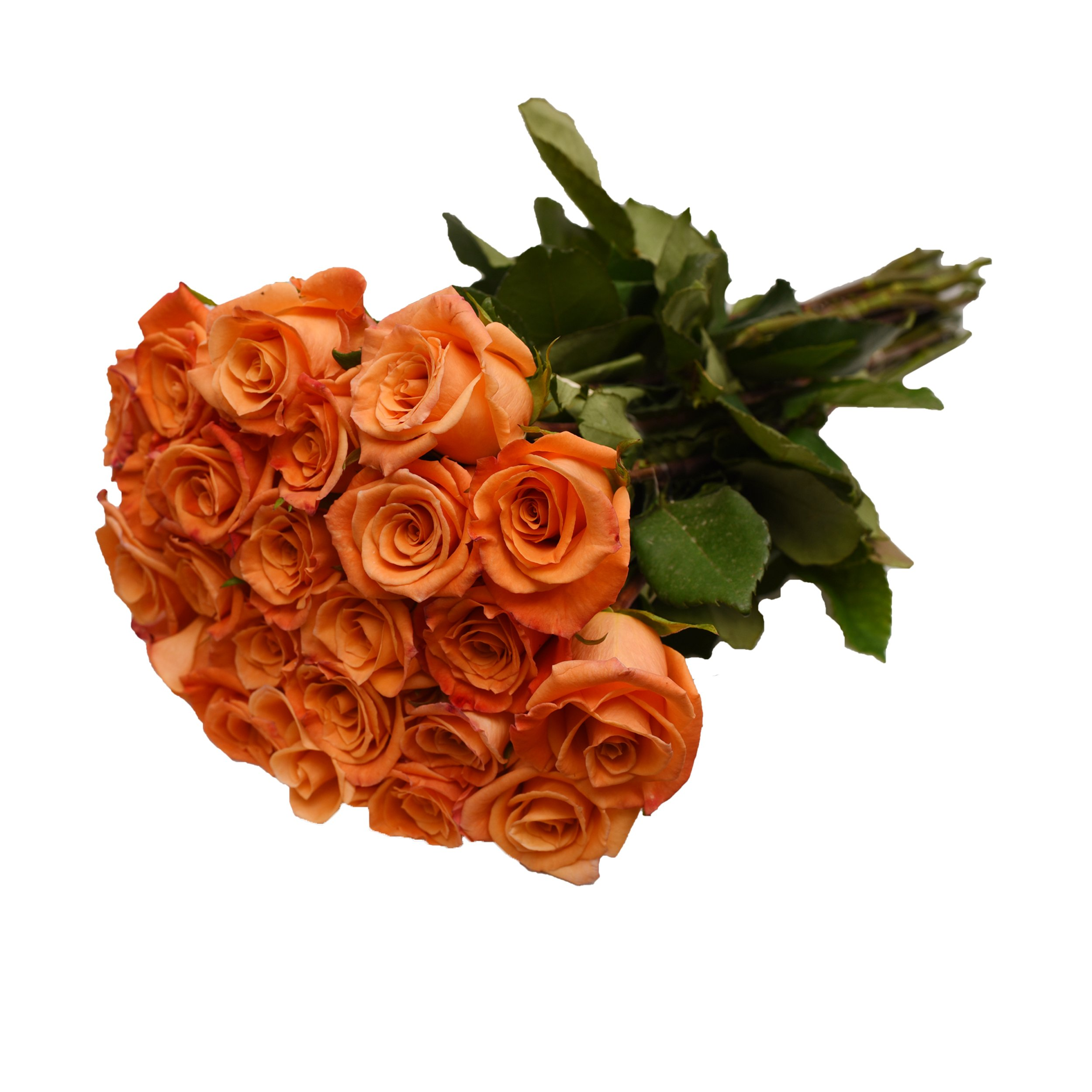 Farm Fresh Natural Orange Roses - 16 in - 125 stems by Bloomingmore