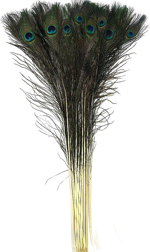 BELLE VOUS Plumas Pavo Real Pack de 20-76-88cm de Largo Plumas de ...