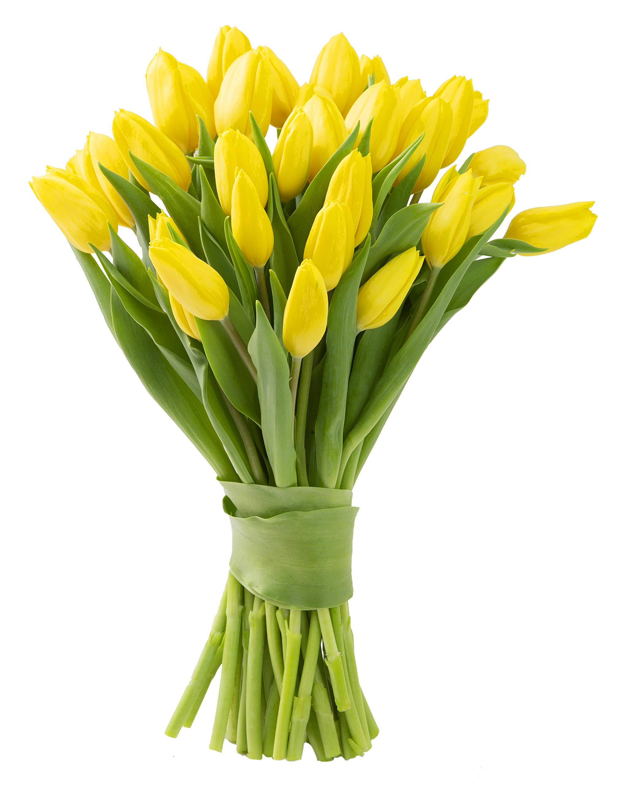 Blooms2Door 30 Yellow Tulips (Farm-Fresh Flowers, Cut-to-Order, and Homegrown in the USA)