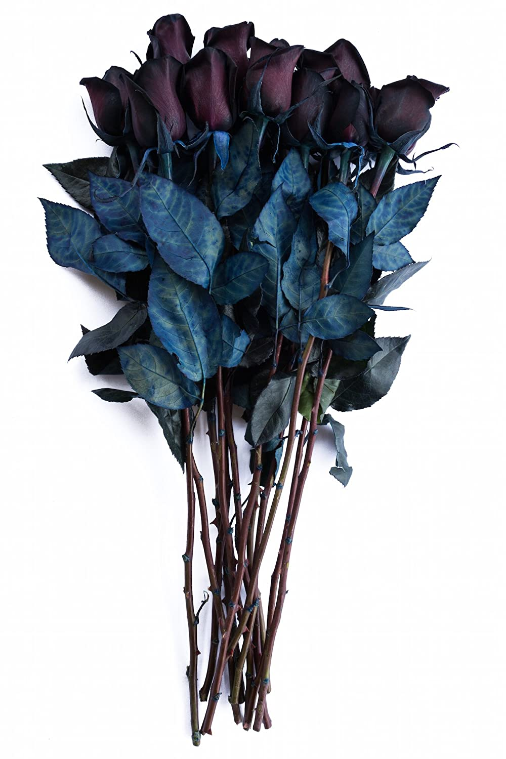 Amazon Flower Explosion 24 Stems Black Roses Bouquet By Real