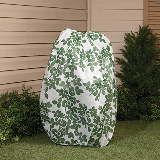 Arbusto chaqueta: Amazon.es: Jardín