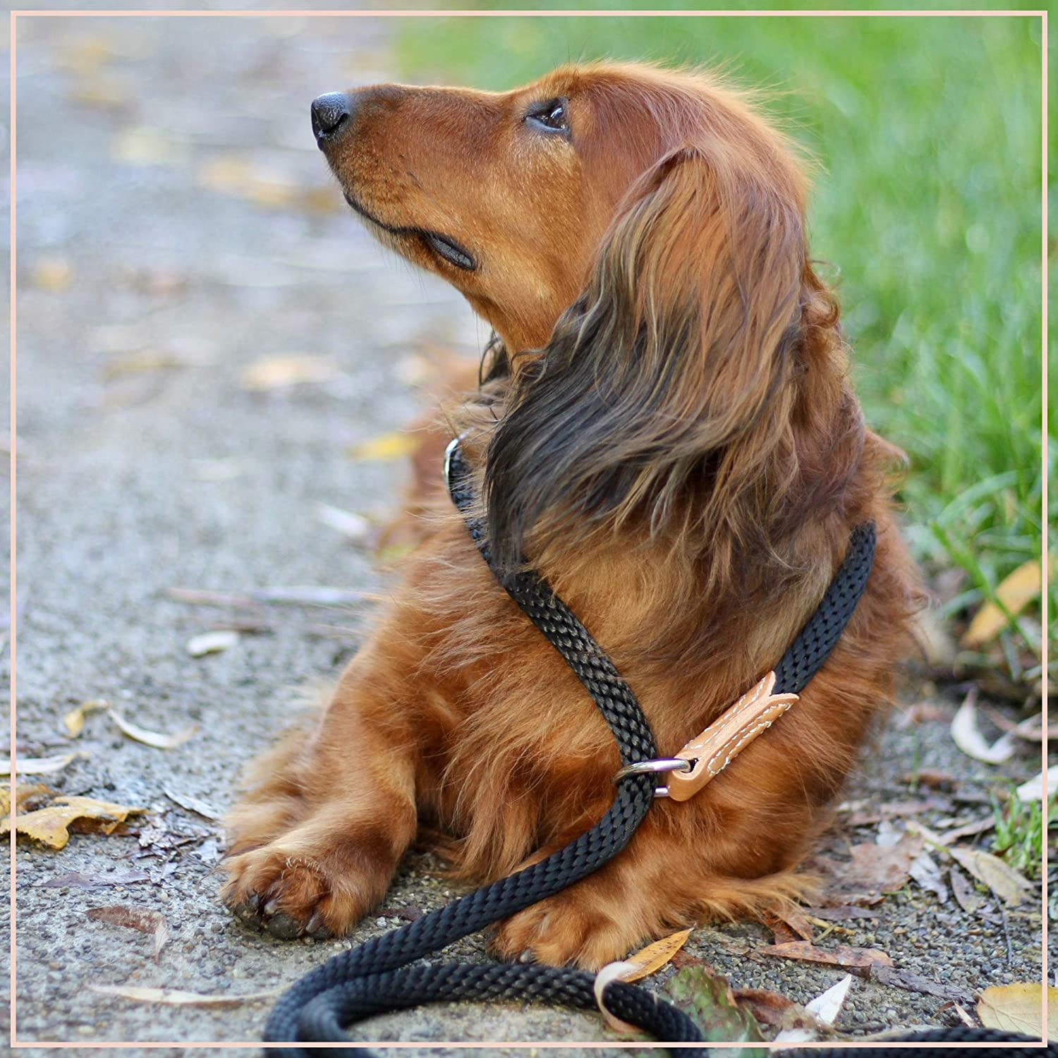 PROFTI Nylon Retriever Leash with integrated collar large//small dogs 1.5 meters choke-stop leather elements