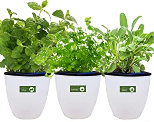 Environet Self Watering Planter with Heirloom Herb Seeds and Coco Potting Soil, Indoor Herb Garden Growing Kit, Modern Decorative White Garden Plant Kit, 3 Pack(Mint, Parsley, Sage)