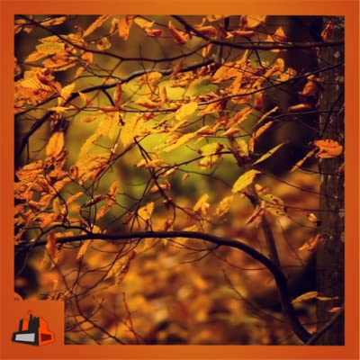 Autumn Leaves - Change the Season on Your Screen