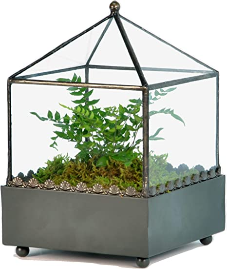 Amazon.com: H Potter Terrario de vidrio Wardian Caso hecho a ...