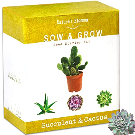 Amazon Natures Blossom Succulent Cactus Growing Kit A