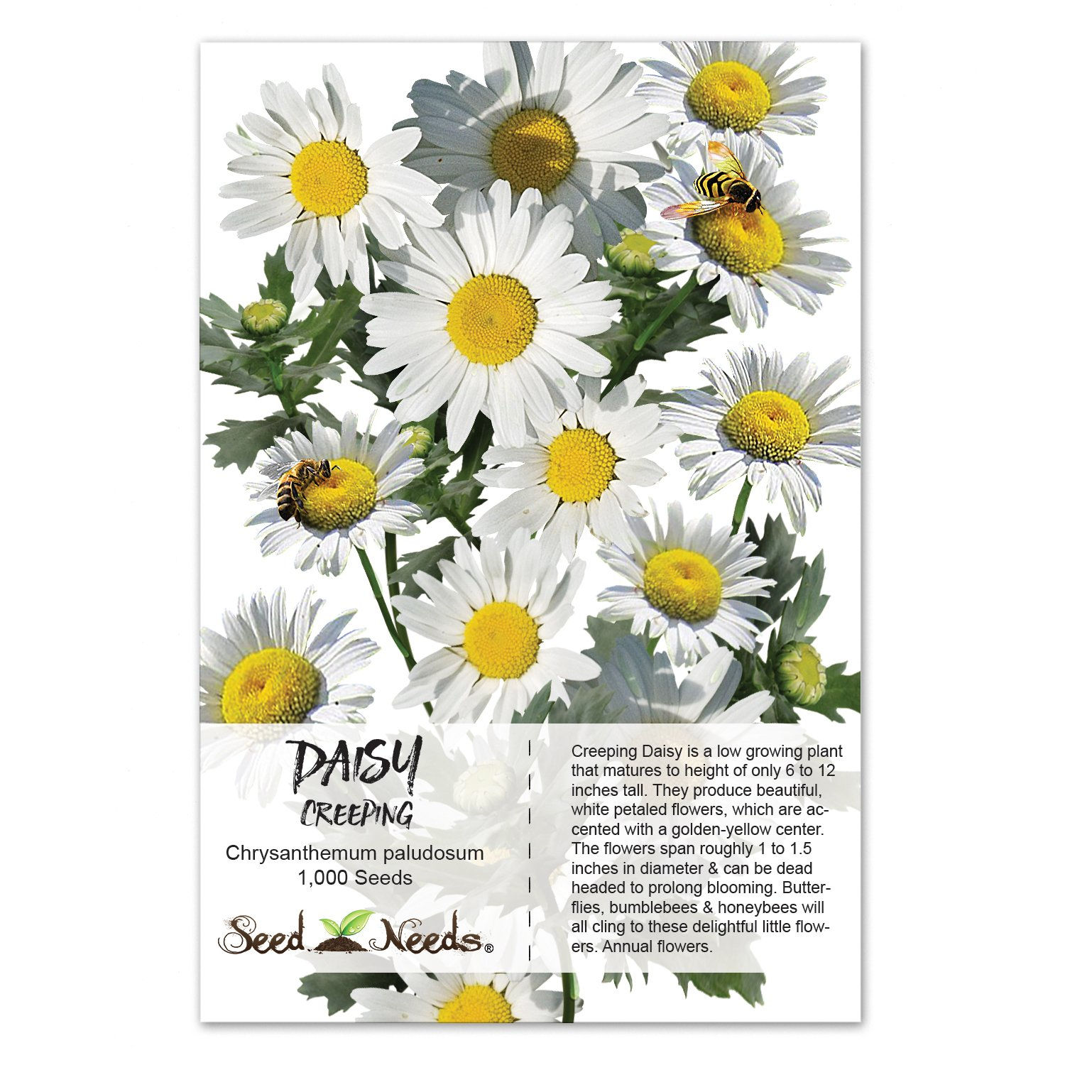 Amazon Package Of 1 000 Flower Seeds Daisy Creeping