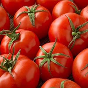 Tomato Seeds - Campbell 33-1 Lb ~120,000 Seeds - Solanum lycopersicum - Farm & Garden Vegetable Seeds - Non-GMO, Heirloom, Open Pollinated, Annual