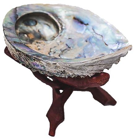 Raum der Stille Incienso Set Abalone Conchas: Amazon.es: Juguetes ...