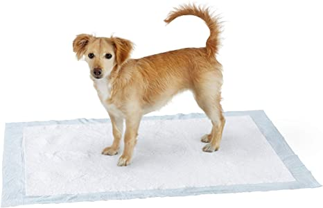 100PCS Pads 60x60cm 60 x 60 cm Super Absorber Pet Dog and Puppy Training Pads Pack of 50//100PCS Heavy Duty Regular Home Protection 23 W x 23 L