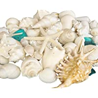 Tumbler Home Mix of Seashells with Sea Glass - Set Includes White Shells up to 4...