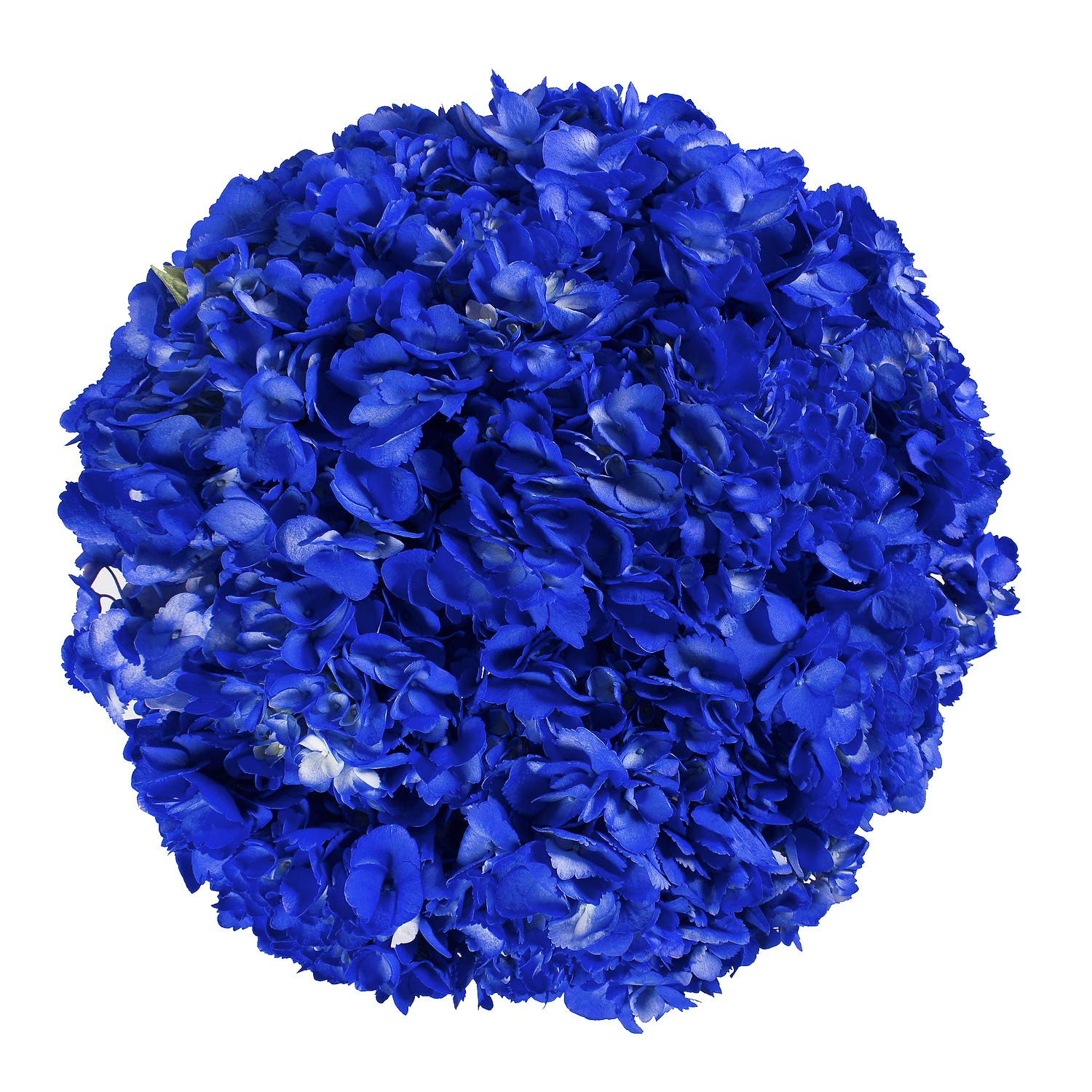 Farm Fresh Natural Painted Dark Blue Hydrangea - Pack 15 by Bloomingmore (Image #2)