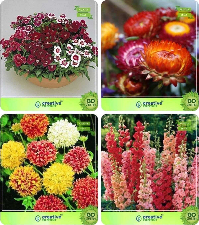 Semillas de Flores Pinkdose®: Semillas de Plantas Purificadoras de ...