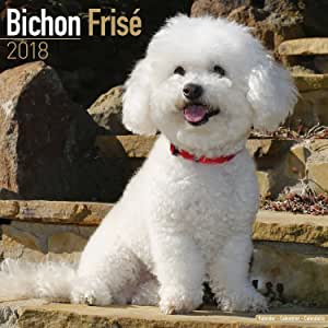 Bichon Frise Perro 2018 UK SQUARE calendario de pared