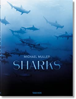 Shark: Fear and Beauty: Amazon co uk: Jean-Marie Ghislain