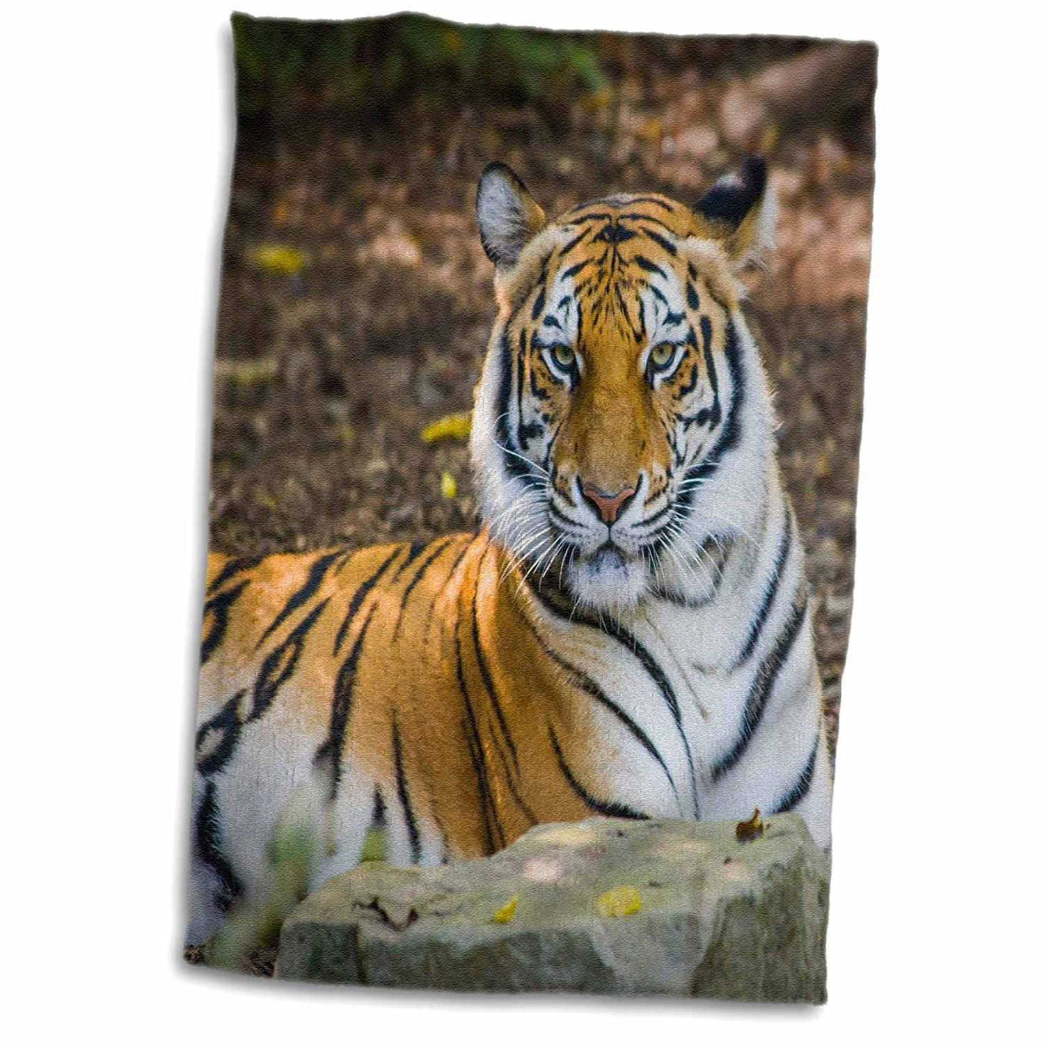 3dRose Bengal Tiger Zoo, Nashville, Tennessee, USA Towel, White, 15 x 22 Pulgadas: Amazon.es: Hogar