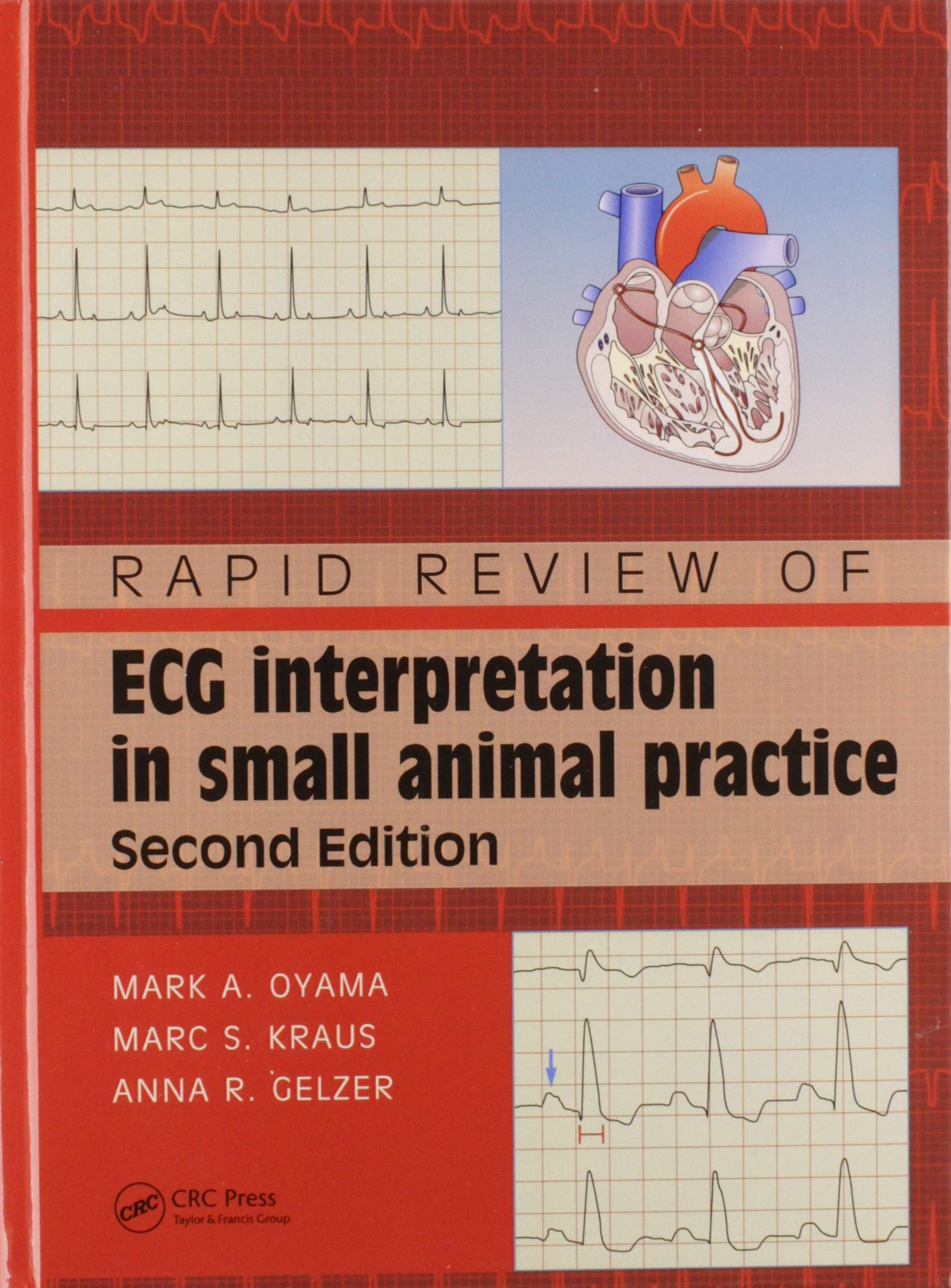 Rapid Review of ECG Interpretation in Small Animal