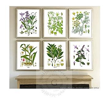 Herbs Kitchen Wall Decor Set Of 6 Unframed Culinary Herbs Botanical Art  Prints, Kitchen Decor