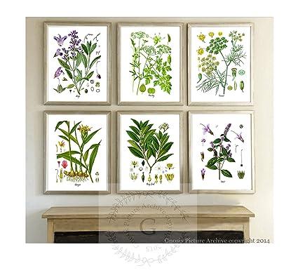 Herbs Kitchen Wall Decor Set Of 6 Unframed Culinary Botanical Art Prints