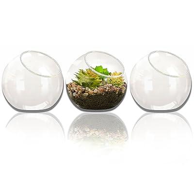 NeutralPure ECO Tabletop Glass Plant Terrarium (3 Pcs): Garden & Outdoor