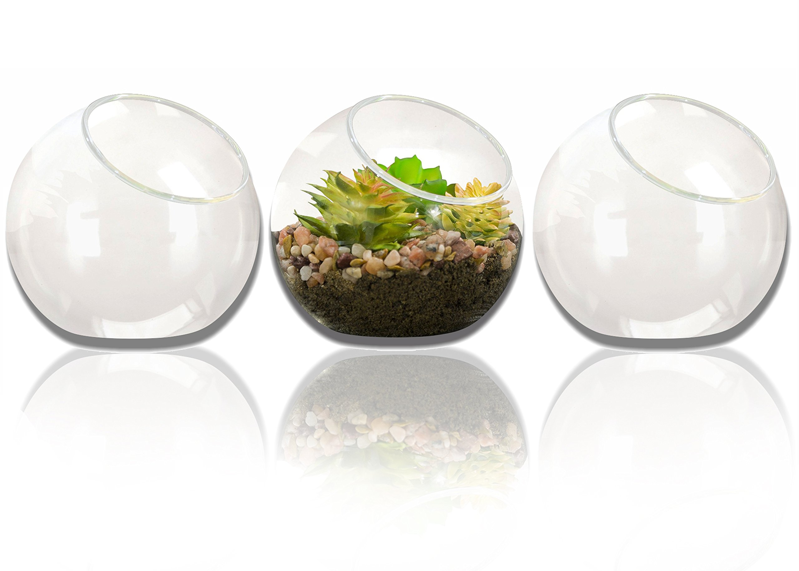 NeutralPure ECO Tabletop Glass Plant Terrarium (3 Pcs) by NeutralPure ECO