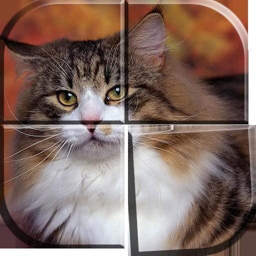 Juegos de Rompecabezas Gatos: Amazon.es: Appstore para Android
