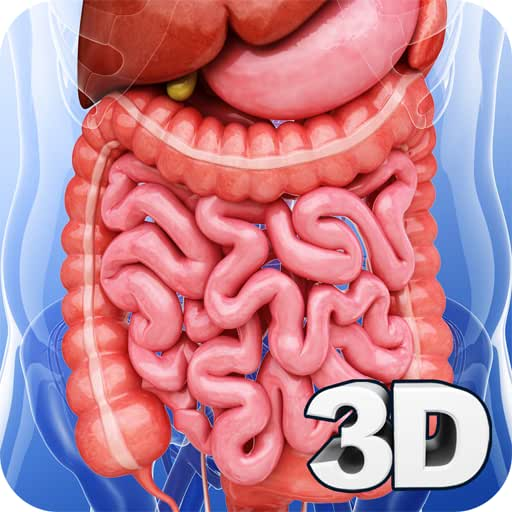 Digestive System Anatomy Pro.