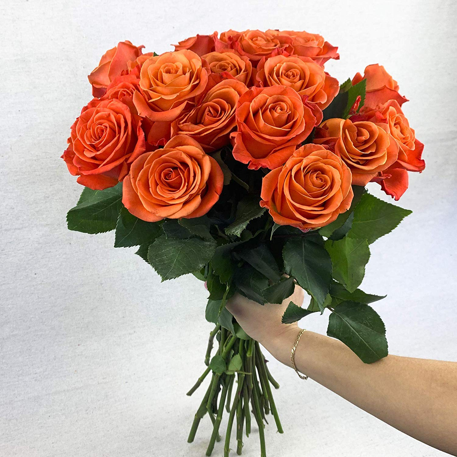 Green Choice Flowers - 24 (2 Dozen) Premium Orange Fresh Roses with 20 inch Long Stem Farm Fresh Flowers Beautiful Orange Rose Flower Cut Per Order Direct from Farm Free Fast Delivery Long Lasting by Greenchoiceflowers (Image #3)