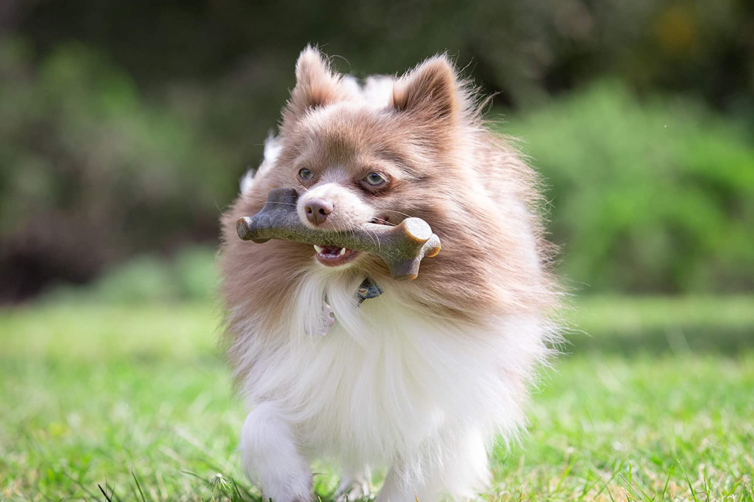 Best dog chew toys for aggressive chewers 12