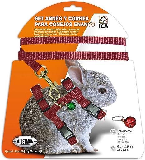 ICA DA1020 Set de Arnés y Correa para Conejos Enanos, Rojo: Amazon ...
