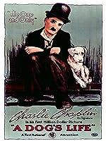 A Dog's Life (Silent)