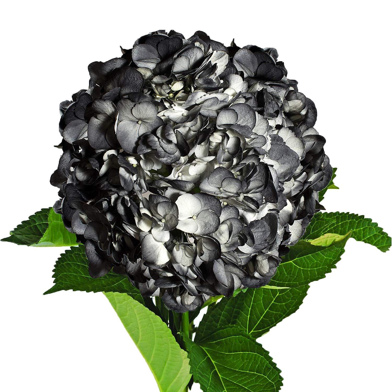 Farm Fresh Natural Painted Black Hydrangeas - Pack 26