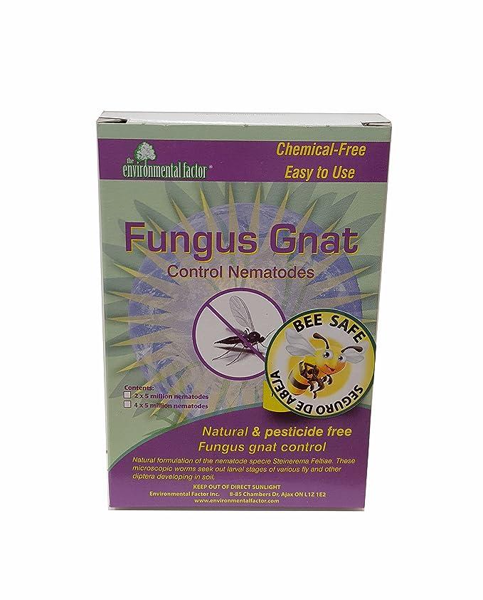 Get Rid of Gnats on Seedlings