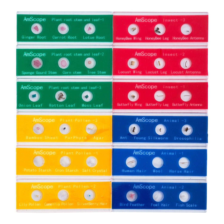 AmScope PS-P12X3-A 36-Specimen Kids Set of Color-coded Zoological and Botanical Prepared Specimen Slides