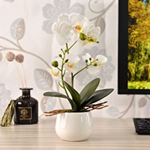 KINBEDY Artificial Bonsai Silk Orchids Phalaenopsis with Ceramics Vase Home Office Decoration Party Wedding Decor, White.