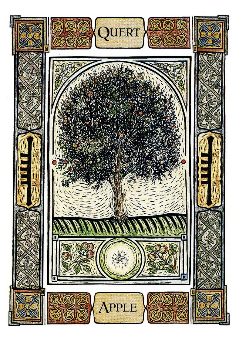 The Celtic Tree Oracle: A System Of Divination: Colin Murray, Liz Murray,  Vanessa Card: 9781859063828: Amazon: Books
