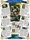 Discover Series Fun Playing Cards - Informational & Educational