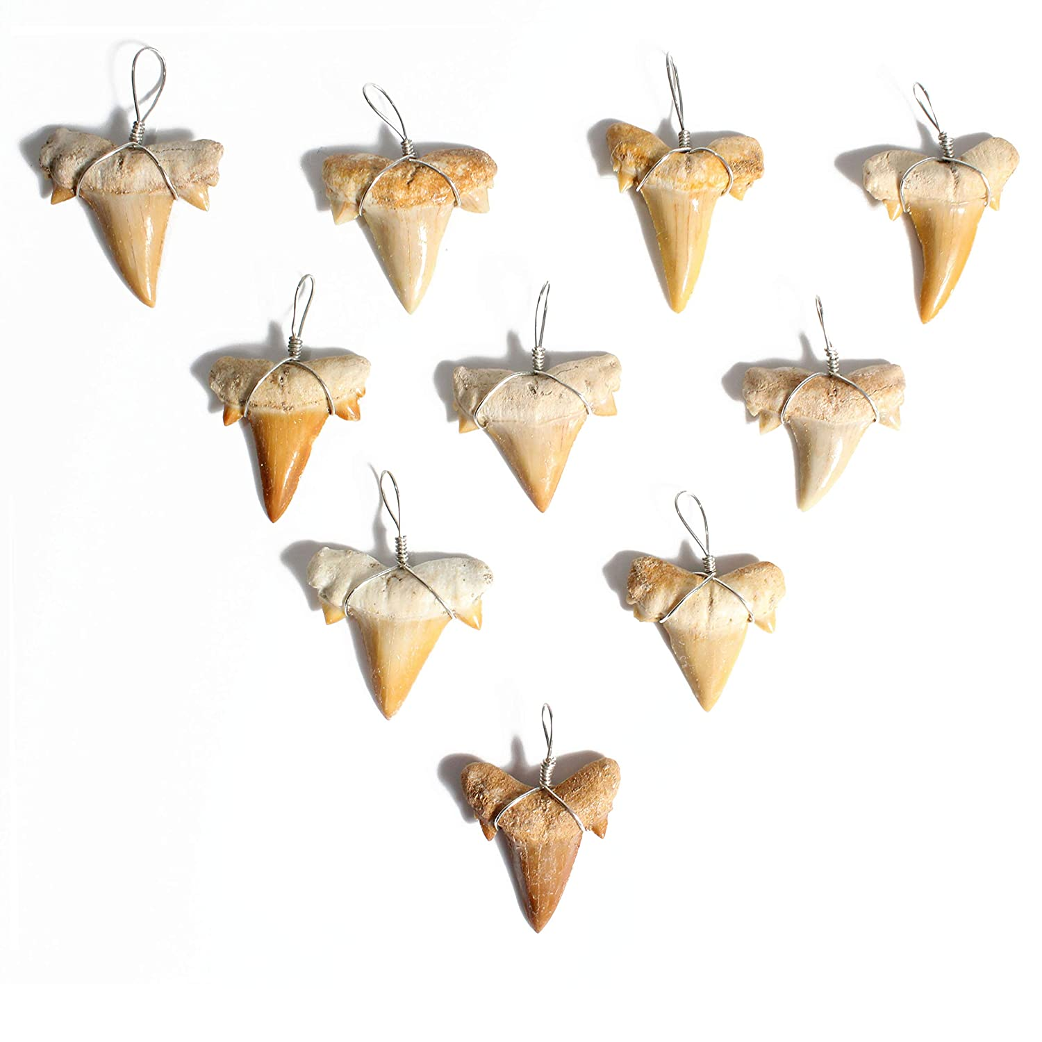10 Wire Wrapped Fossilized Shark Teeth for Necklace - Shark Tooth Necklace Charm Pendant