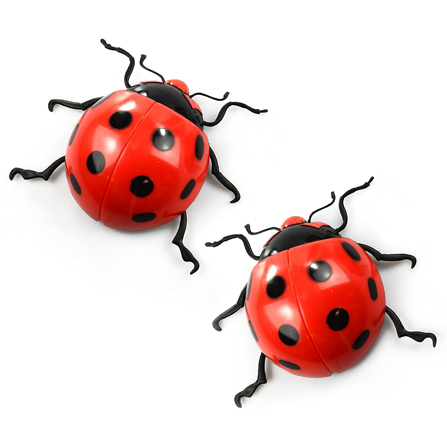 Image result for ladybird