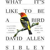 What It's Like to Be a Bird: From Flying to Nesting, Eating to Singing--What Birds Are Doing, and Why (Sibley Guides)