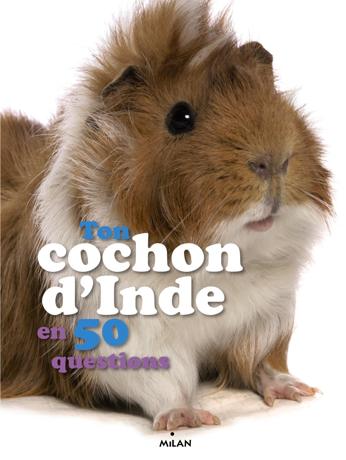 Ton Cochon D Inde En 50 Questions Amazon Fr Emmanuelle Figueras