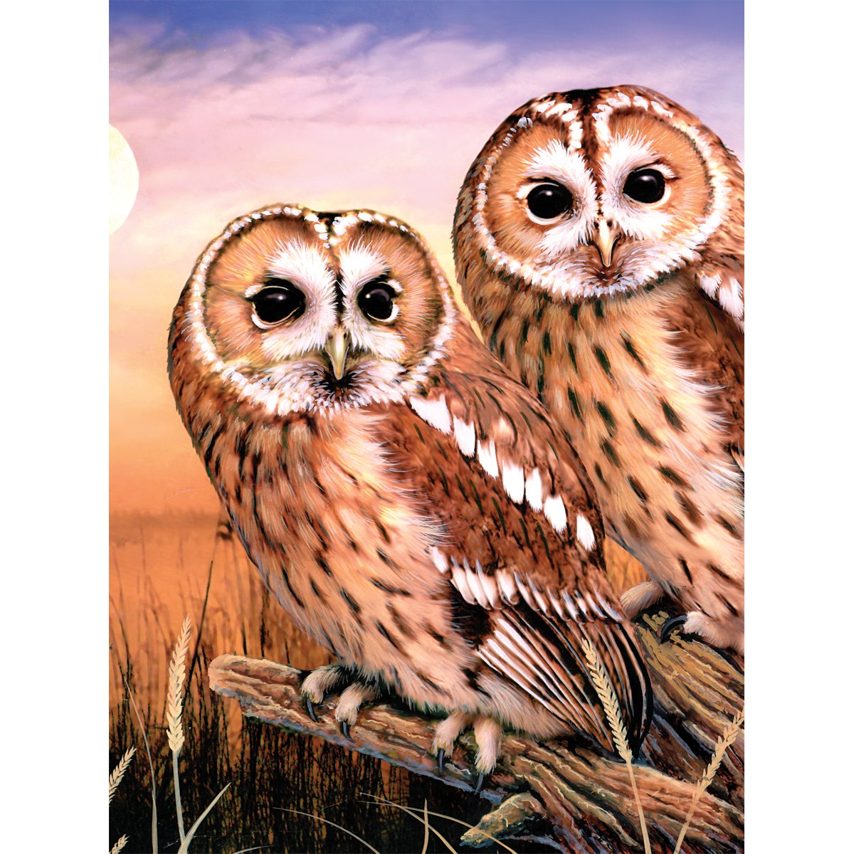 Tawny Owls Small Royal Brush PJS-87 8.75 by 11.75-Inch Junior Paint by Number Kit