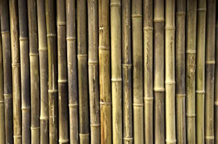 Prepasted wallpaper high quality mural from photo of: Bamboo ...