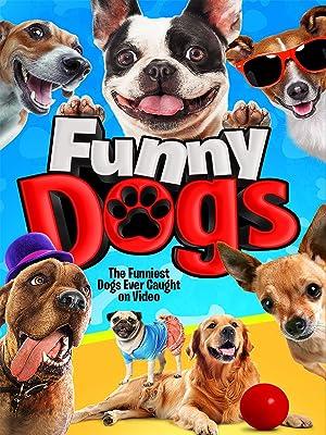 Image of: Puppy Amazoncom Amazoncom Watch Funny Dogs Prime Video