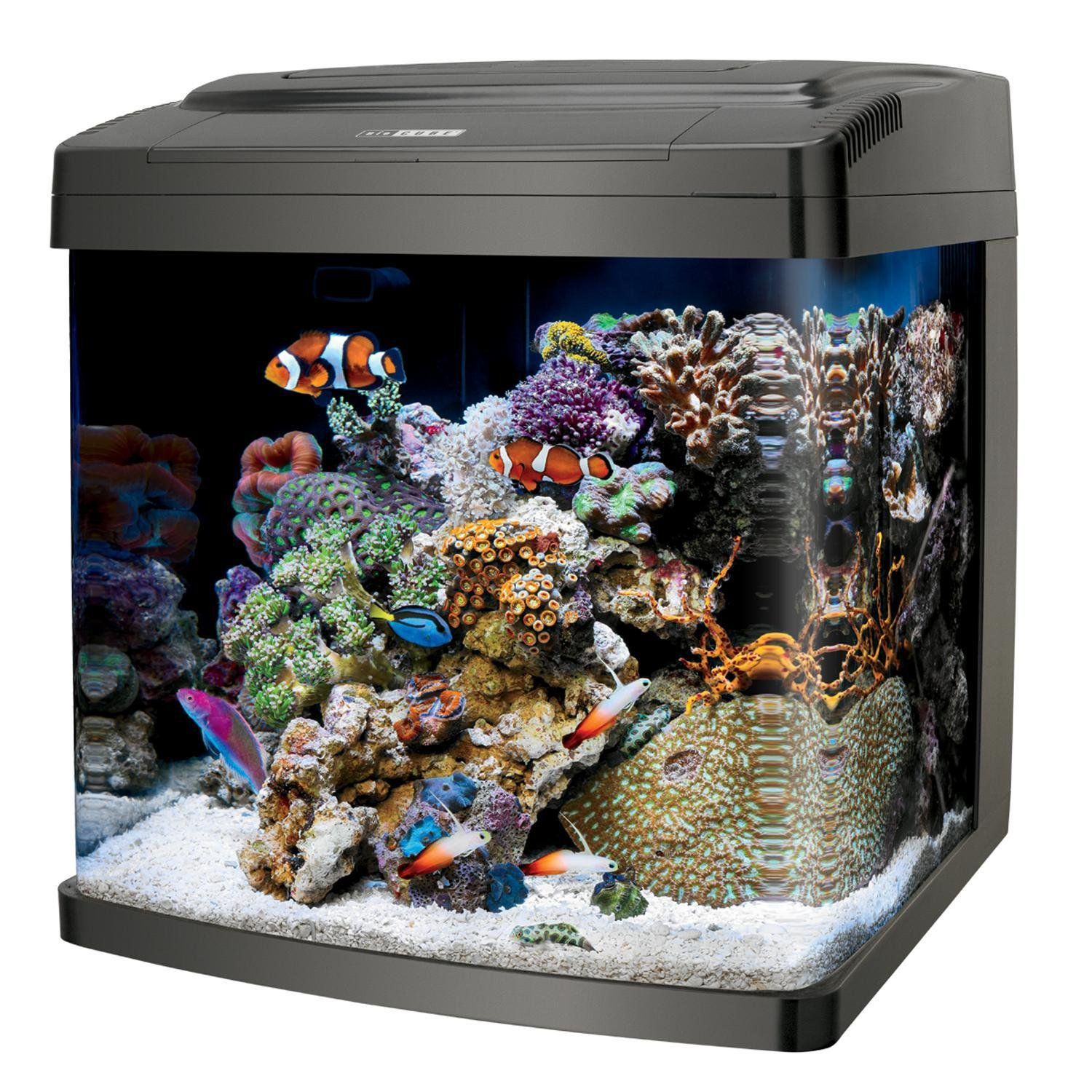 fish tank review